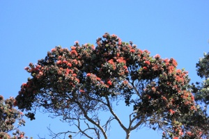Ohia canopy, high above the trail