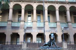 Sydney Hospital's lucky boar, il porcellino