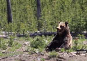 Feeding the cub