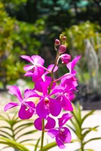 Orchid garden, Kuching