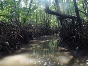 Mangrove kayaking trip